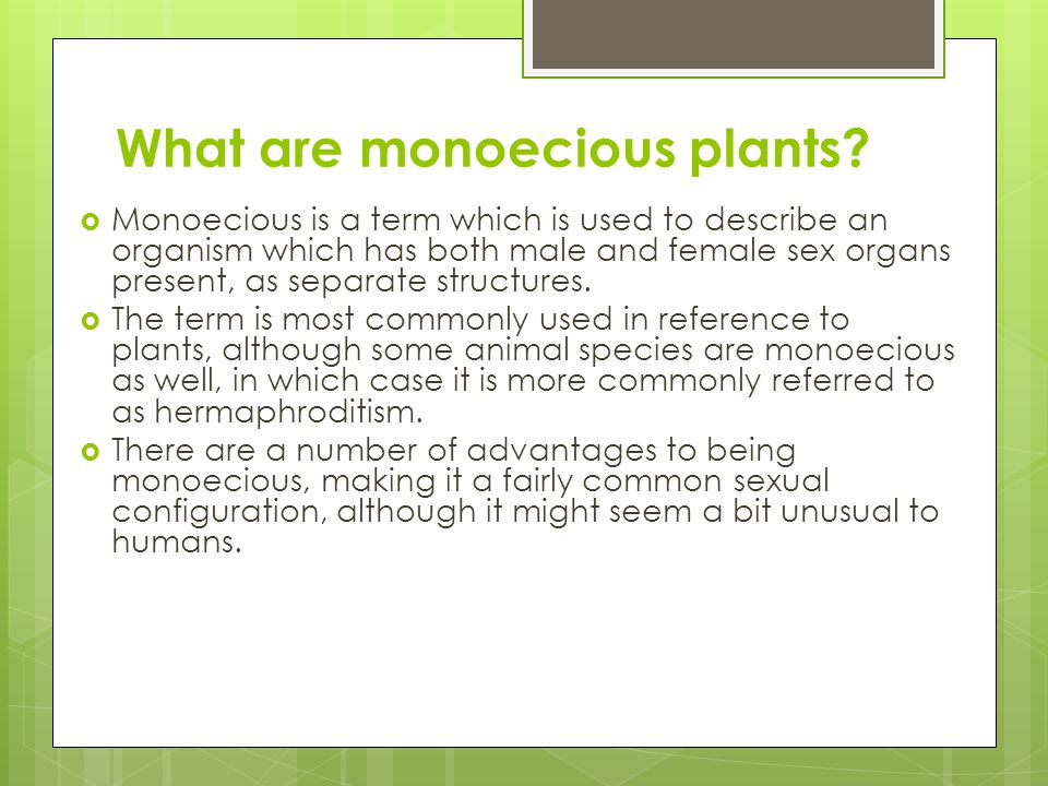 What are monoecious plants.