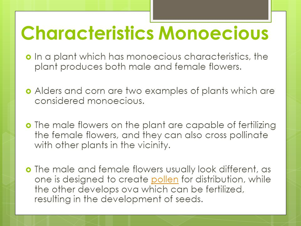 Characteristics Monoecious In a plant which has monoecious characteristics, the plant produces both male and female flowers.