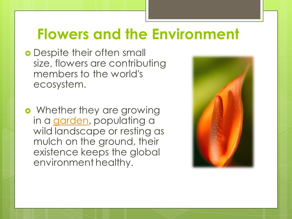 Flowers and the Environment Despite their often small size, flowers are contributing members to the world s ecosystem.
