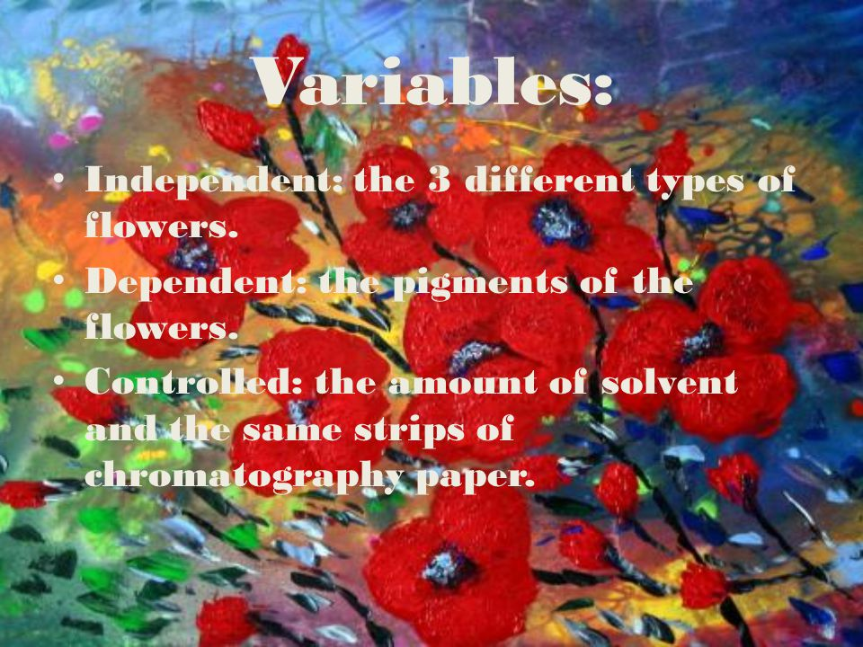 Variables: Independent: the 3 different types of flowers. Dependent: the pigments of the flowers. Controlled: the amount of solvent and the same strip