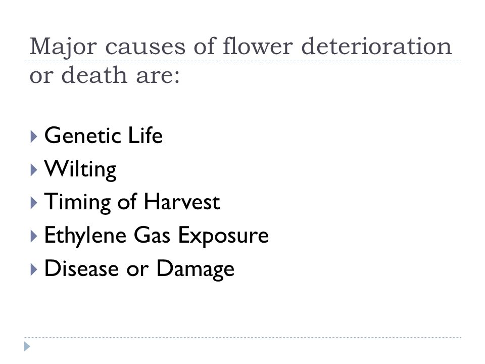 Major causes of flower deterioration or death are: Genetic Life Wilting Timing of Harvest Ethylene Gas Exposure Disease or Damage