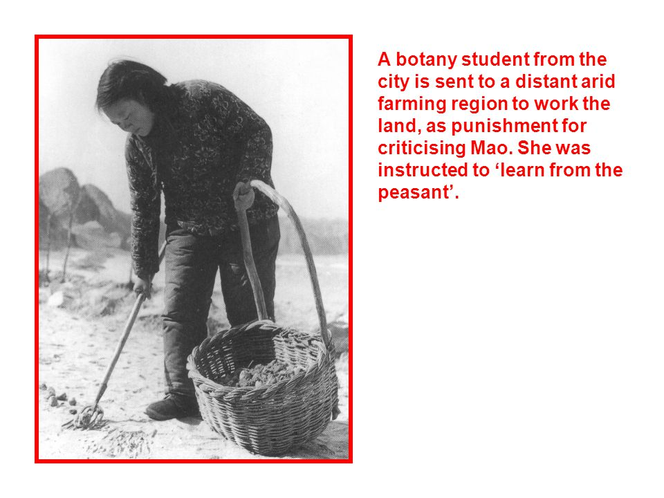 A botany student from the city is sent to a distant arid farming region to work the land, as punishment for criticising Mao. She was instructed to lea