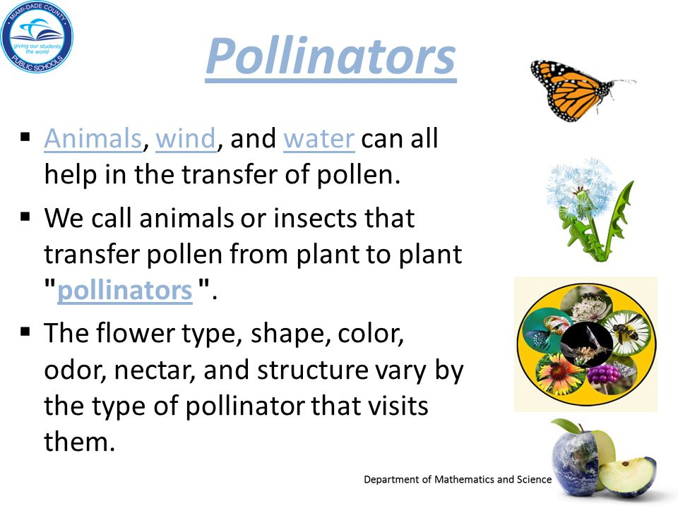 Pollinators Animals, wind, and water can all help in the transfer of pollen. Animalswindwater We call animals or insects that transfer pollen from pla