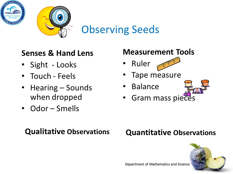 Observing Seeds Senses & Hand Lens Sight - Looks Touch - Feels Hearing – Sounds when dropped Odor – Smells Qualitative Observations Measurement Tools