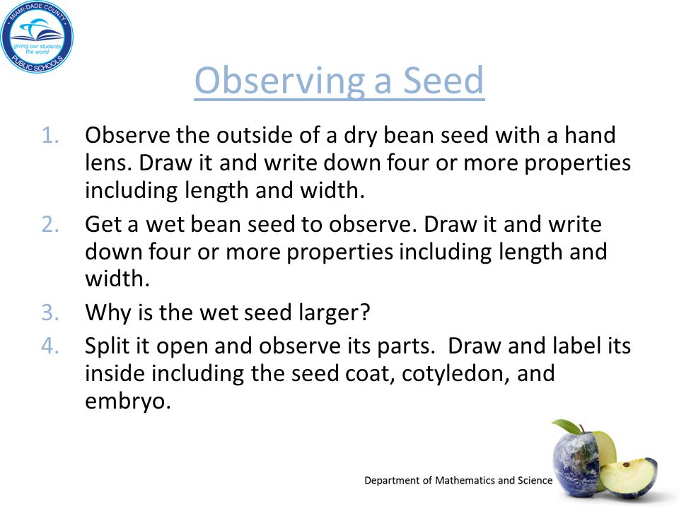 Observing a Seed 1.Observe the outside of a dry bean seed with a hand lens. Draw it and write down four or more properties including length and width.