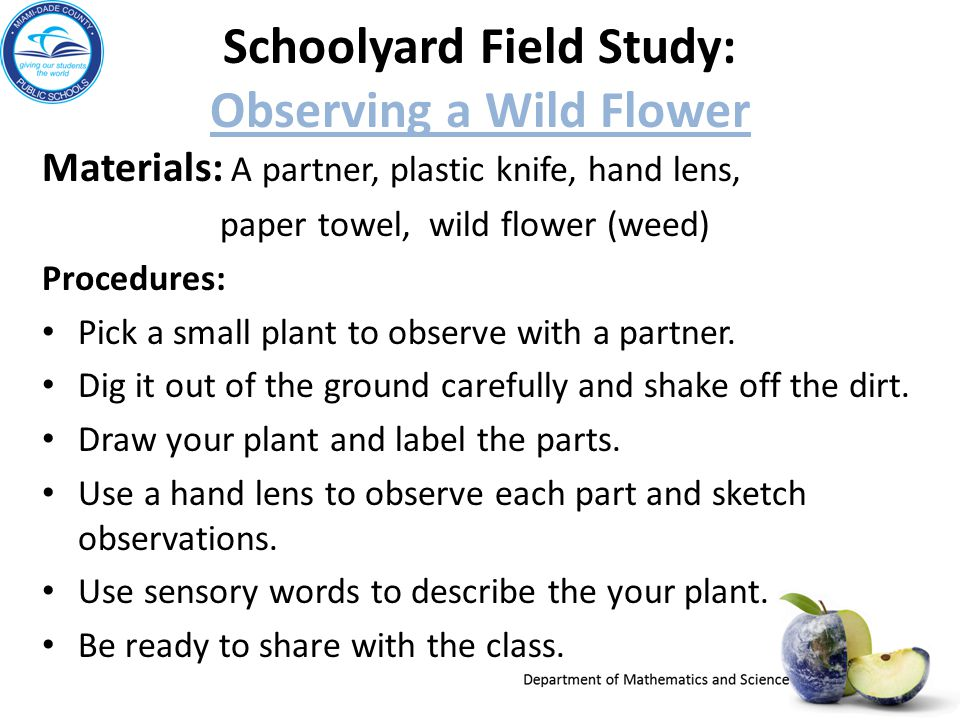 Schoolyard Field Study: Observing a Wild Flower Observing a Wild Flower Materials: A partner, plastic knife, hand lens, paper towel, wild flower (weed