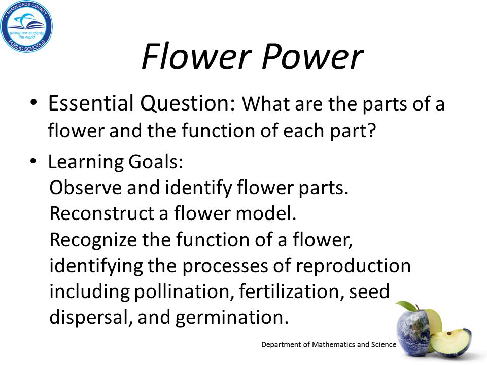 Flower Power Essential Question: What are the parts of a flower and the function of each part? Learning Goals: Observe and identify flower parts. Reco