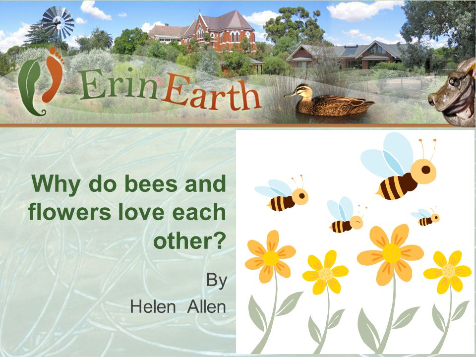 Why do bees and flowers love each other? By Helen Allen