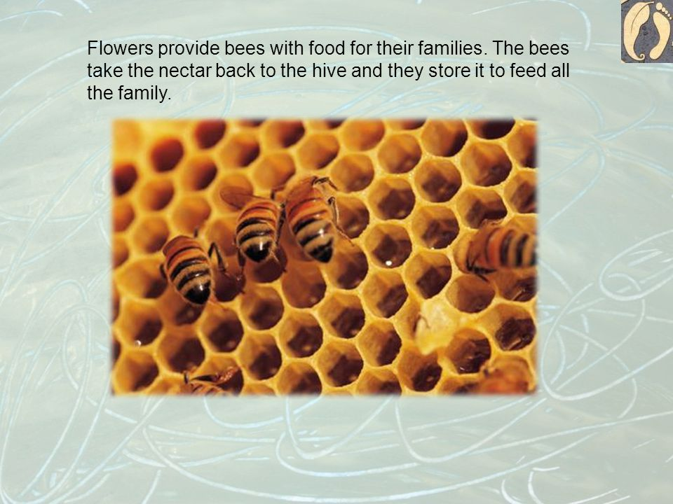Flowers provide bees with food for their families.