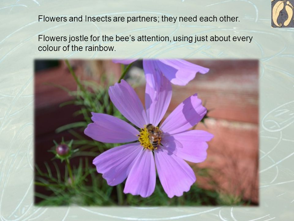 Flowers and Insects are partners; they need each other.