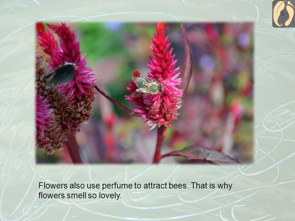 Flowers also use perfume to attract bees. That is why flowers smell so lovely.