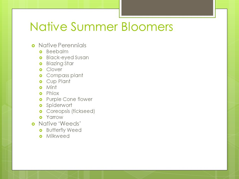 Native Summer Bloomers Native Perennials Beebalm Black-eyed Susan Blazing Star Clover Compass plant Cup Plant Mint Phlox Purple Cone flower Spiderwort Coreopsis (tickseed) Yarrow Native Weeds Butterfly Weed Milkweed