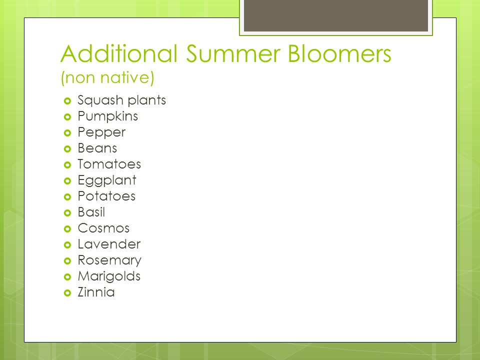 Additional Summer Bloomers (non native) Squash plants Pumpkins Pepper Beans Tomatoes Eggplant Potatoes Basil Cosmos Lavender Rosemary Marigolds Zinnia
