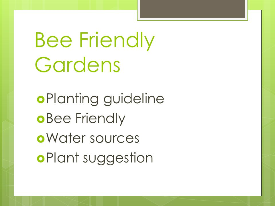 Bee Friendly Gardens Planting guideline Bee Friendly Water sources Plant suggestion