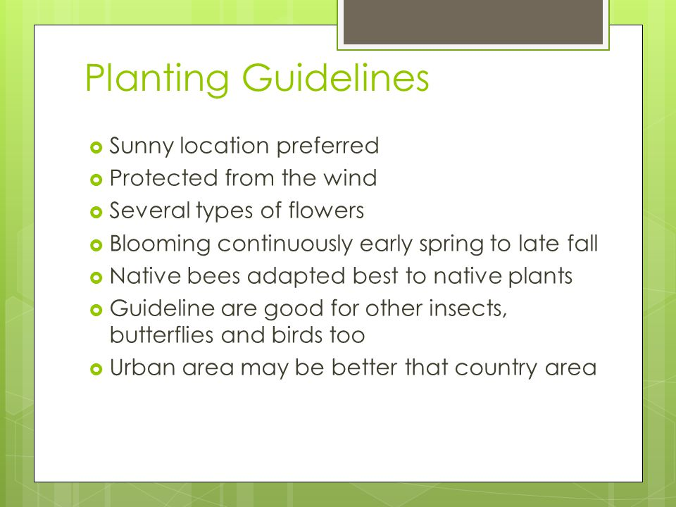 Planting Guidelines Sunny location preferred Protected from the wind Several types of flowers Blooming continuously early spring to late fall Native bees adapted best to native plants Guideline are good for other insects, butterflies and birds too Urban area may be better that country area