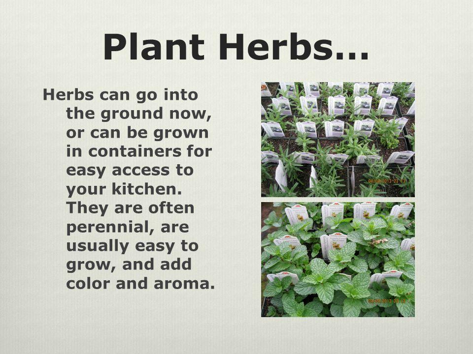 Plant Lamium… A.k.a.White Nancy, this tough little plant shows up early each spring.