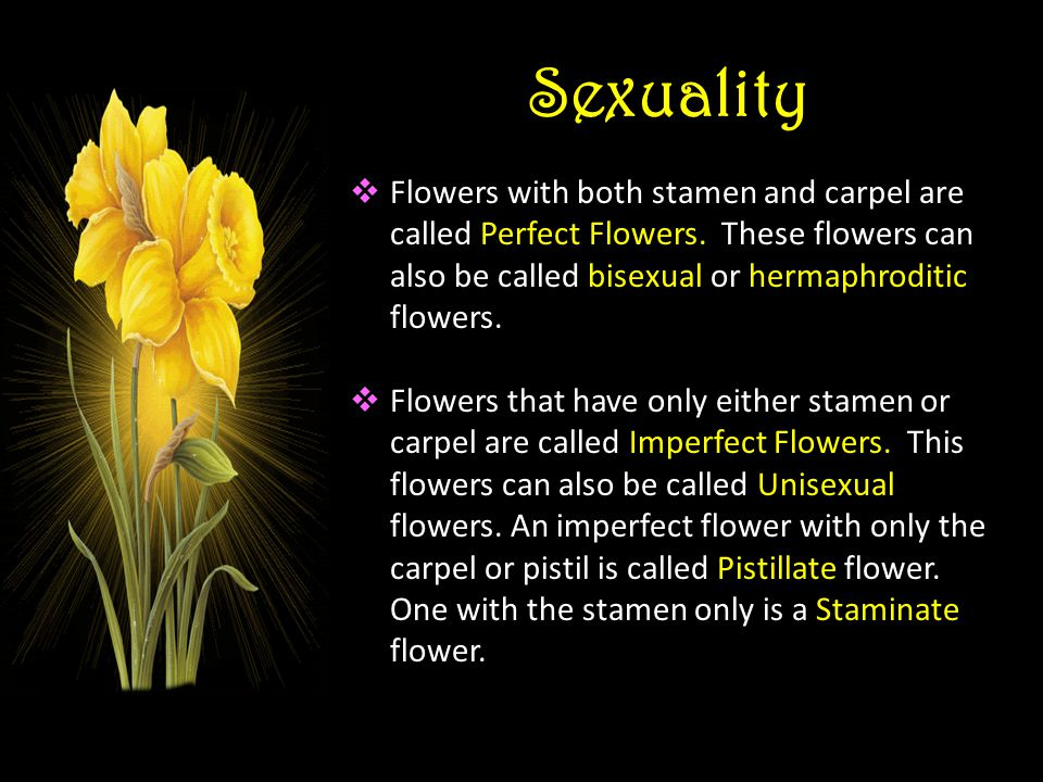 Sexuality Flowers with both stamen and carpel are called Perfect Flowers. These flowers can also be called bisexual or hermaphroditic flowers. Flowers