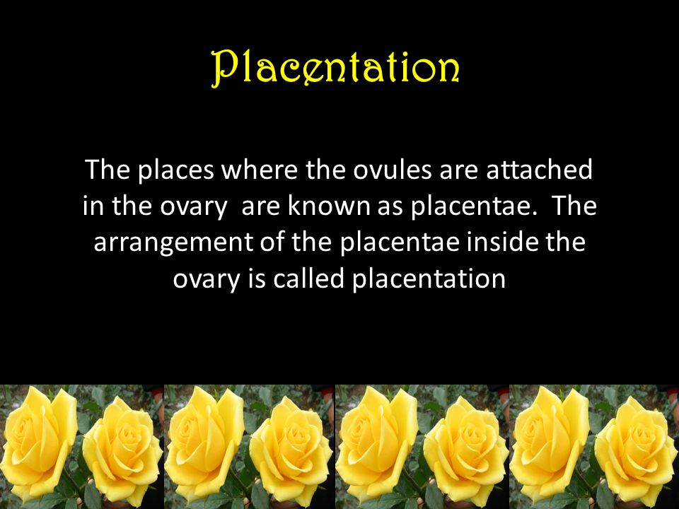Placentation The places where the ovules are attached in the ovary are known as placentae. The arrangement of the placentae inside the ovary is called