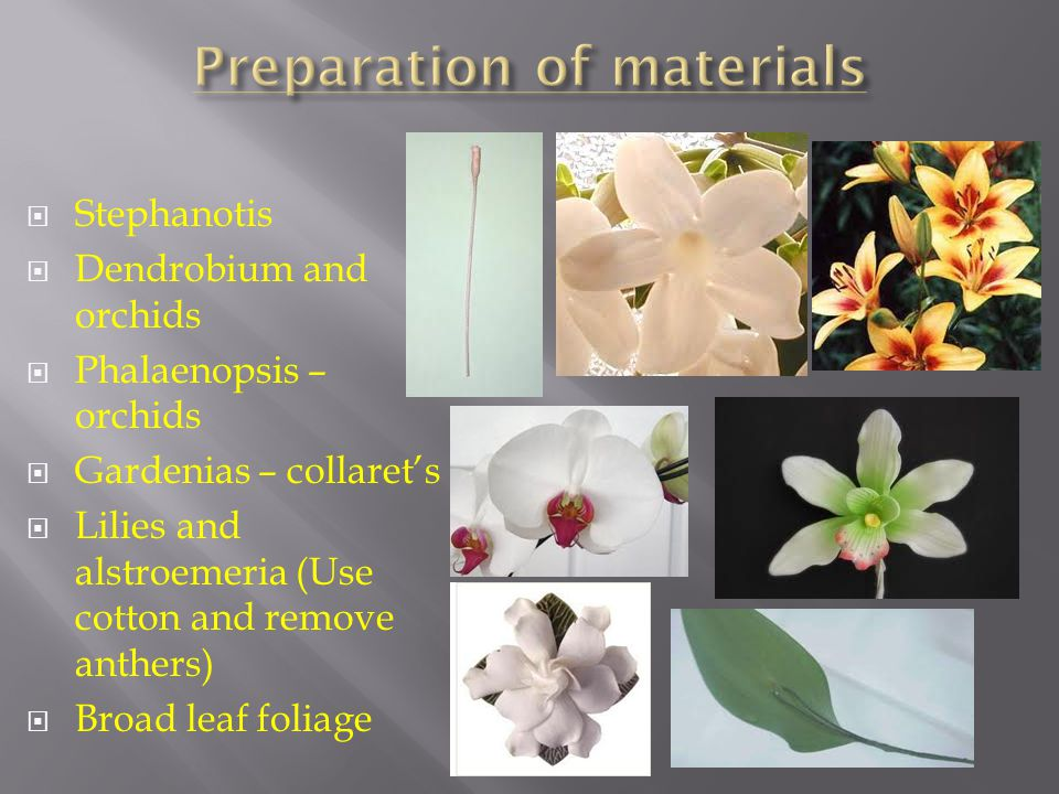 Stephanotis Dendrobium and orchids Phalaenopsis – orchids Gardenias – collarets Lilies and alstroemeria (Use cotton and remove anthers) Broad leaf foliage