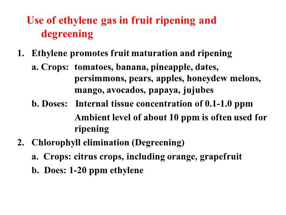 Use of ethylene gas in fruit ripening and degreening 1.Ethylene promotes fruit maturation and ripening a.