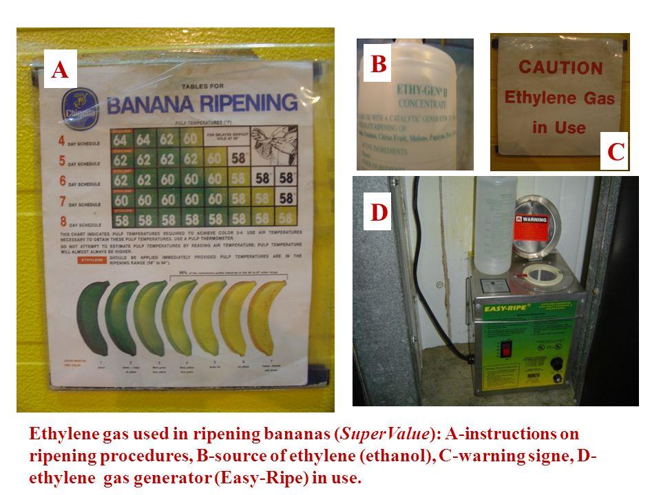Ethylene gas used in ripening bananas (SuperValue): A-instructions on ripening procedures, B-source of ethylene (ethanol), C-warning signe, D- ethylene gas generator (Easy-Ripe) in use.