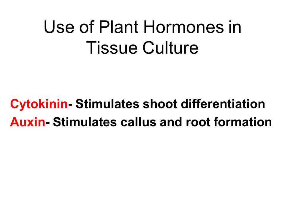 Use of Plant Hormones in Tissue Culture Cytokinin- Stimulates shoot differentiation Auxin- Stimulates callus and root formation