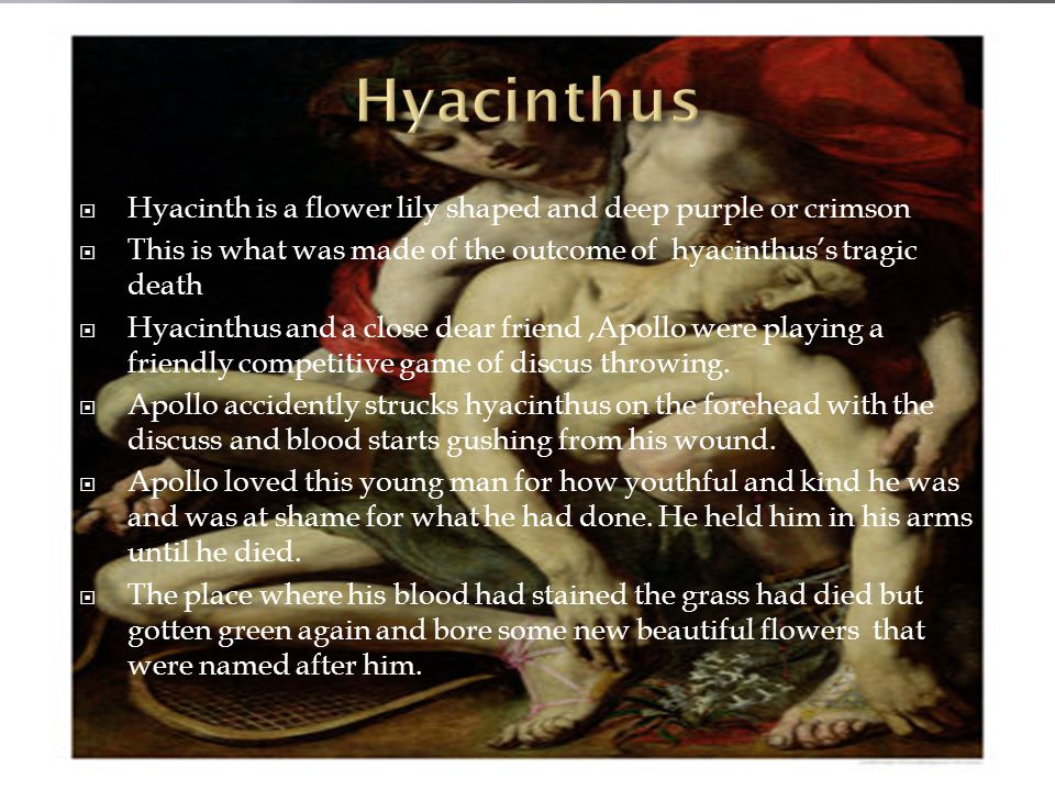 Hyacinth is a flower lily shaped and deep purple or crimson This is what was made of the outcome of hyacinthuss tragic death Hyacinthus and a close dear friend,Apollo were playing a friendly competitive game of discus throwing.
