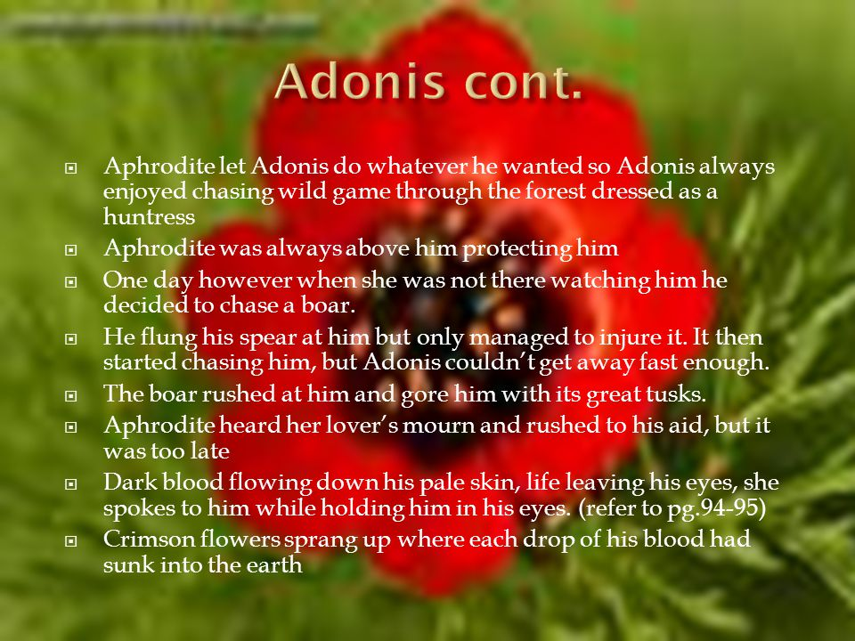 Aphrodite let Adonis do whatever he wanted so Adonis always enjoyed chasing wild game through the forest dressed as a huntress Aphrodite was always above him protecting him One day however when she was not there watching him he decided to chase a boar.