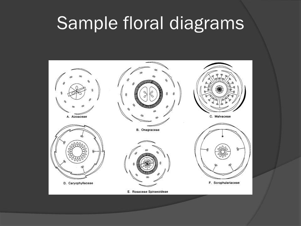Sample floral diagrams