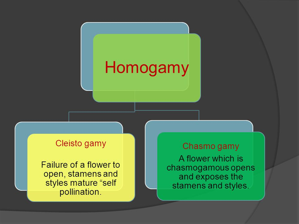 Homogamy Cleisto gamy Failure of a flower to open, stamens and styles mature self pollination. Chasmo gamy A flower which is chasmogamous opens and ex