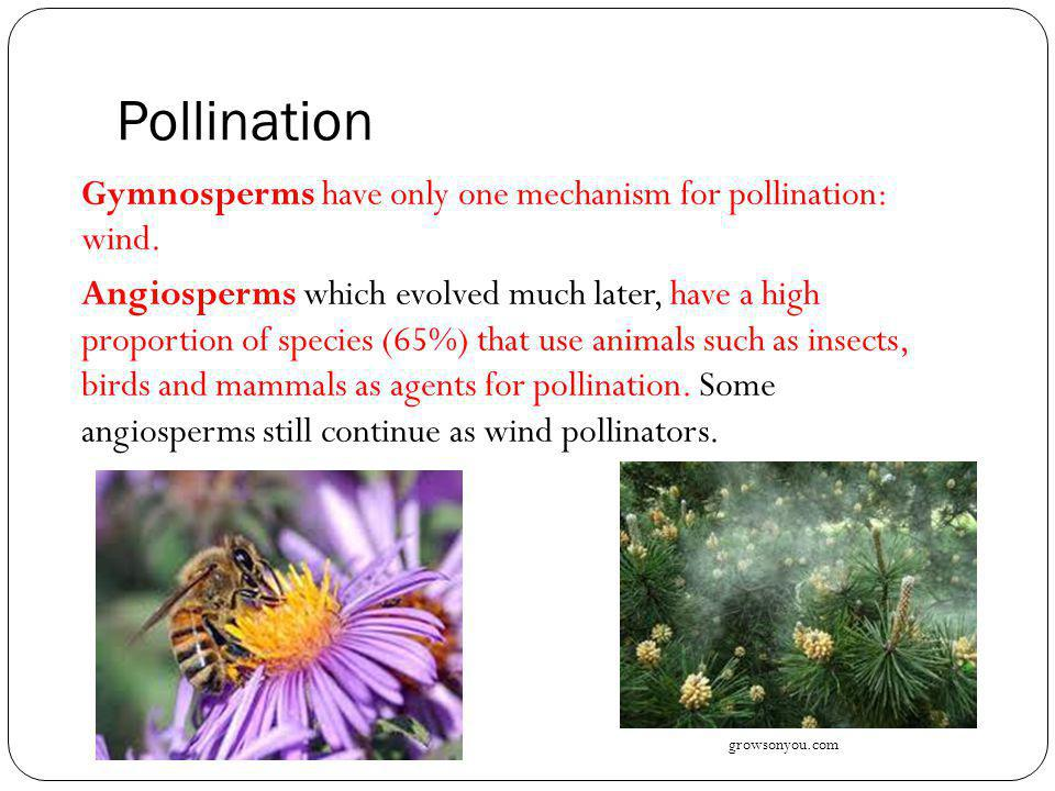 Pollination by Insects The flower shape can also be so restricting that a certain type of behaviour may be required to access the pollen.