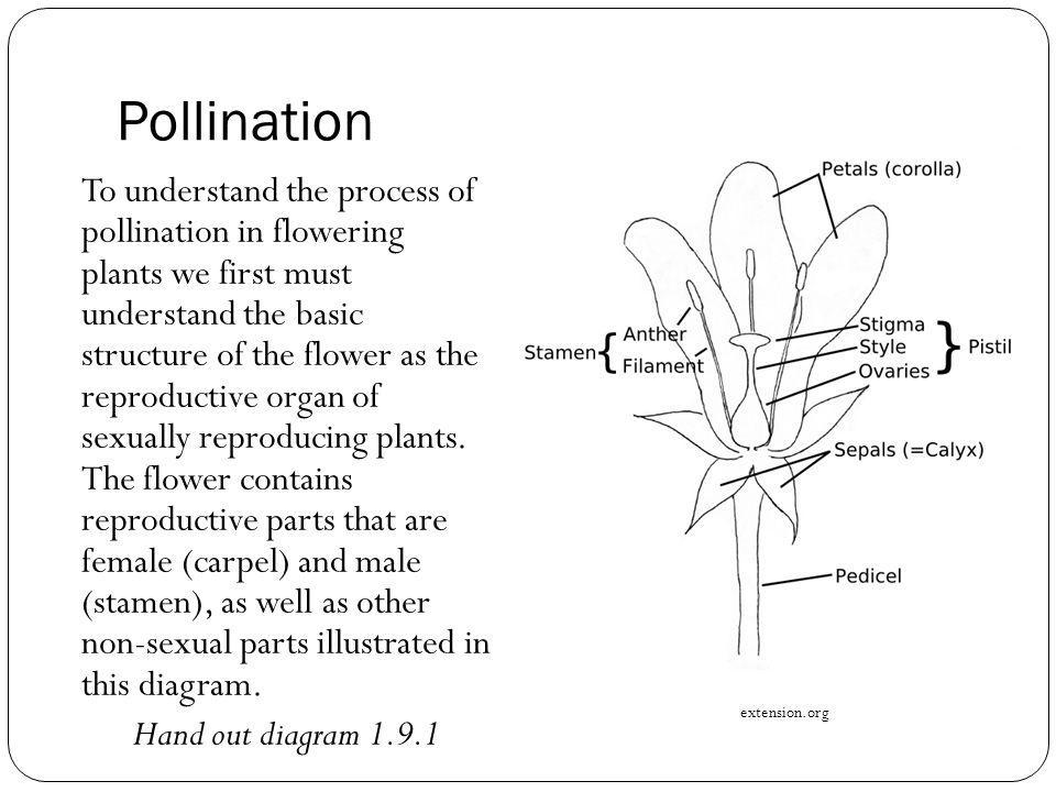 Pollination by Animals Animals that act as pollinators search for flowers for a meal of nectar or pollen.