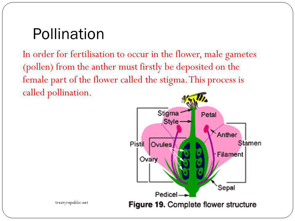 Pollination by Birds Bird-pollinating plants must produce large amounts of nectar because if the birds do not find enough food to maintain themselves, they will not continue to visit flowers of the same plant.