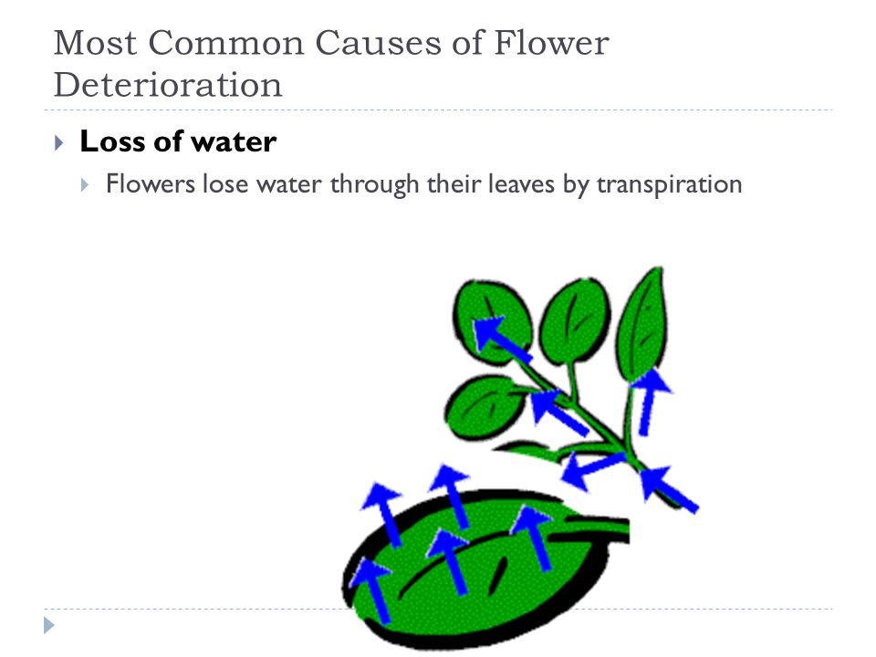 Most Common Causes of Flower Deterioration Loss of water Flowers lose water through their leaves by transpiration