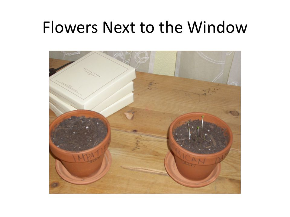Flowers Next to the Window