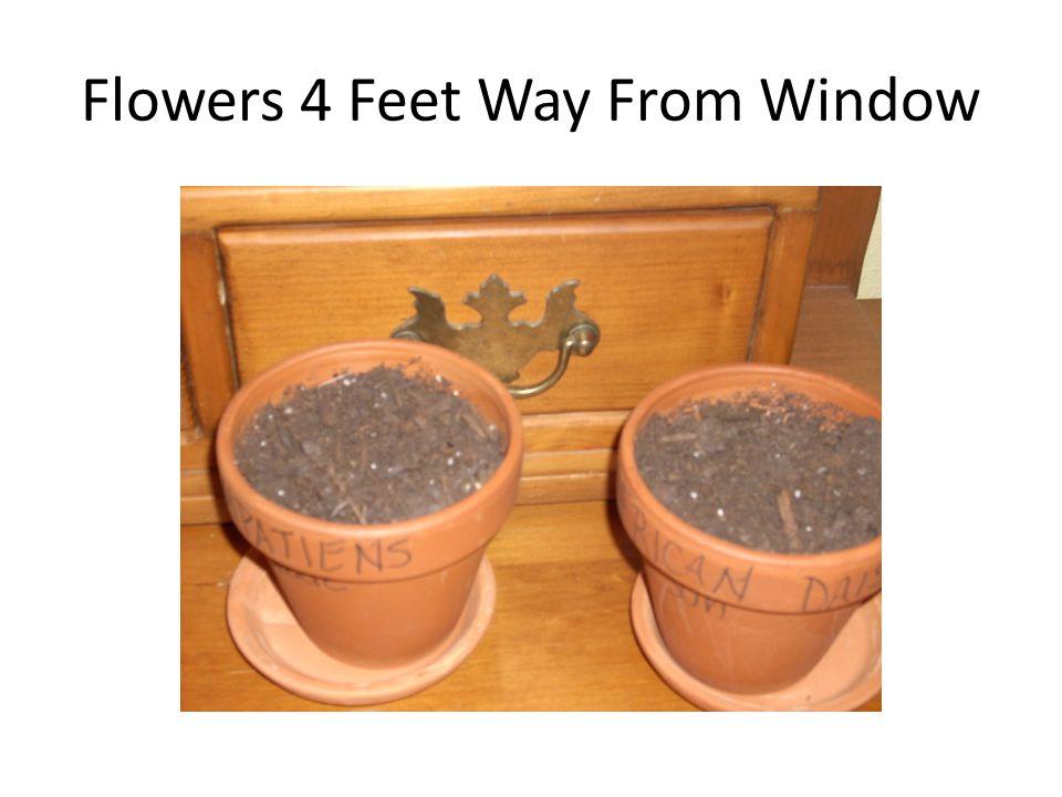 Flowers 4 Feet Way From Window