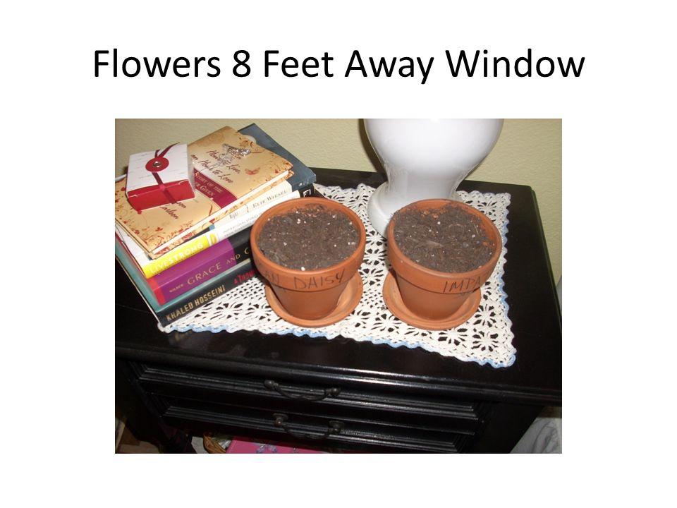 Flowers 8 Feet Away Window