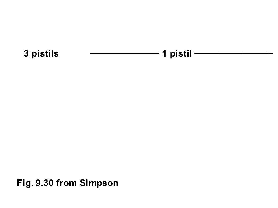 Fig. 9.30 from Simpson 3 pistils1 pistil
