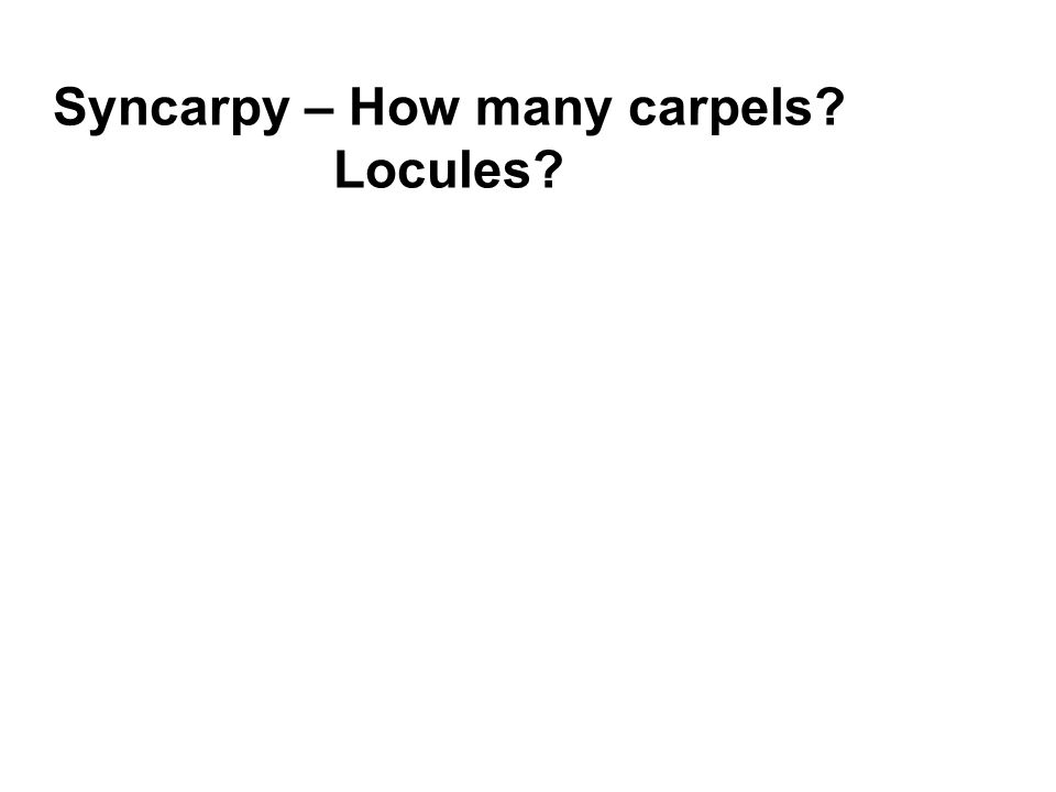 Syncarpy – How many carpels? Locules?