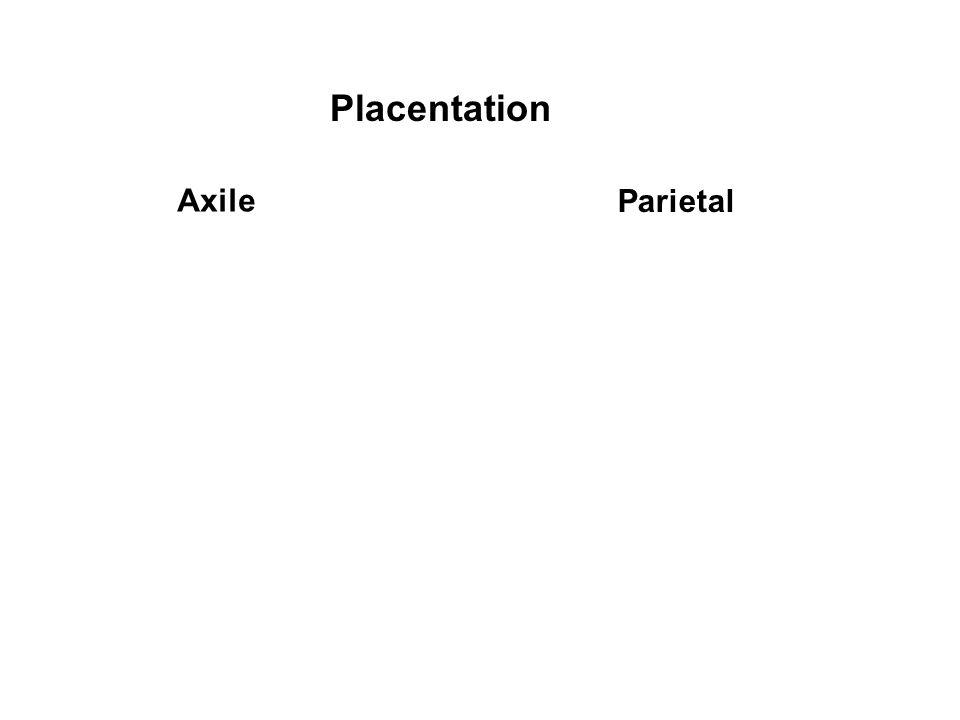 Axile Parietal Placentation