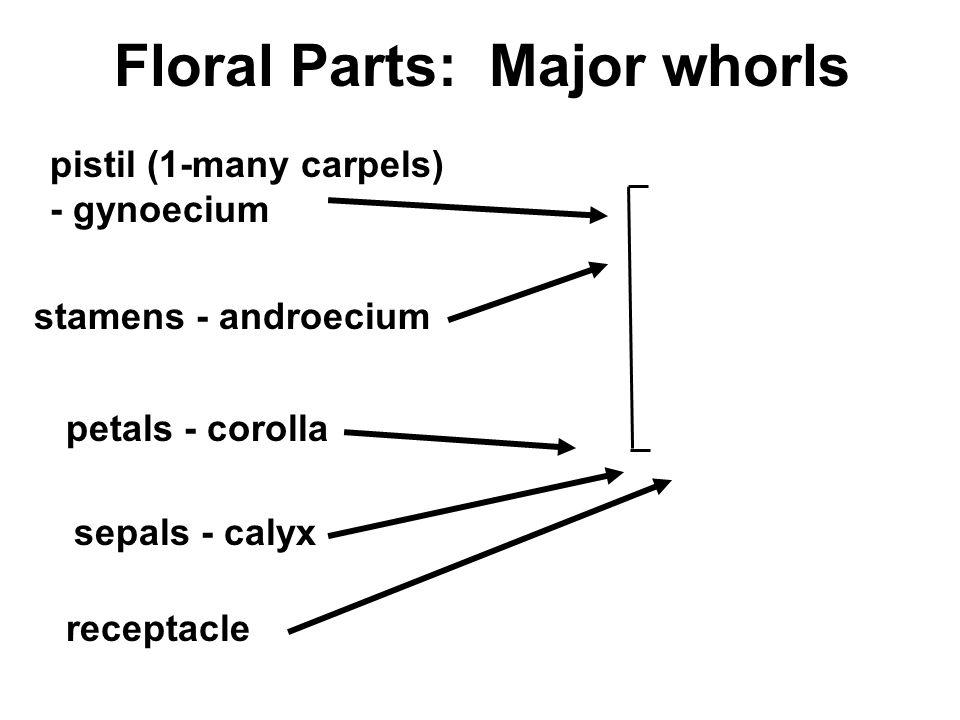 Floral Parts: Major whorls pistil (1-many carpels) - gynoecium stamens - androecium petals - corolla sepals - calyx receptacle