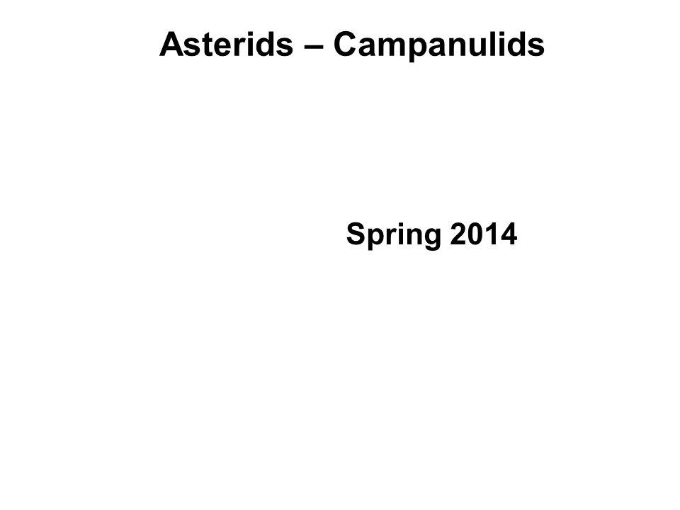 Asterids – Campanulids Spring 2014