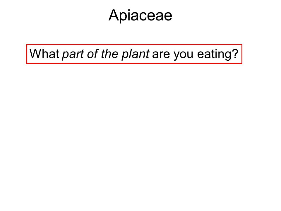 What part of the plant are you eating? Apiaceae