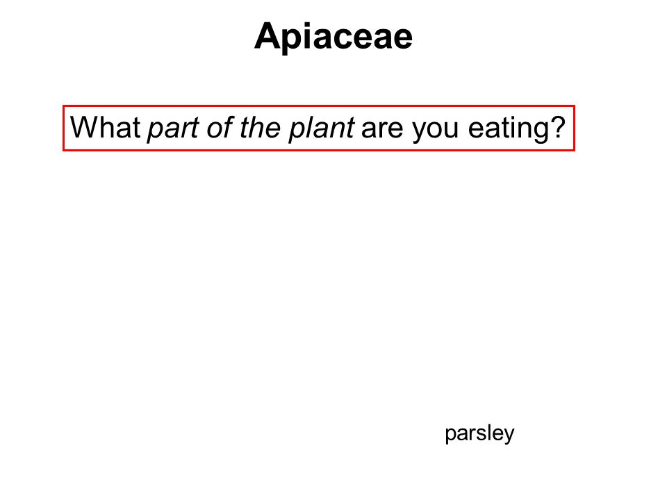What part of the plant are you eating? Apiaceae parsley