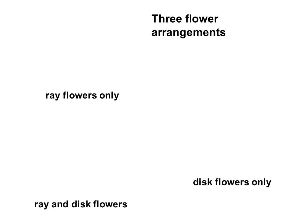 disk flowers only ray flowers only ray and disk flowers Three flower arrangements