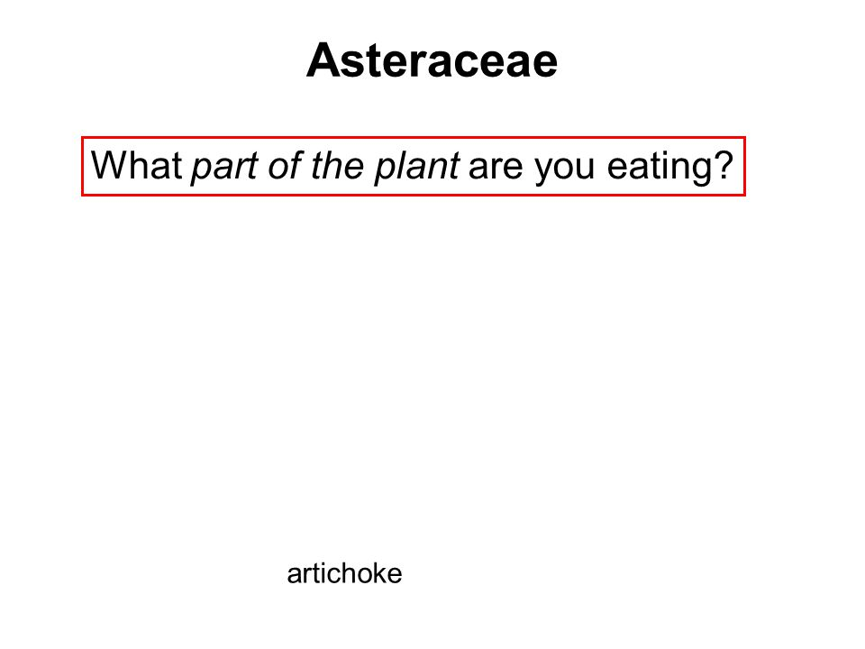 What part of the plant are you eating? Asteraceae artichoke