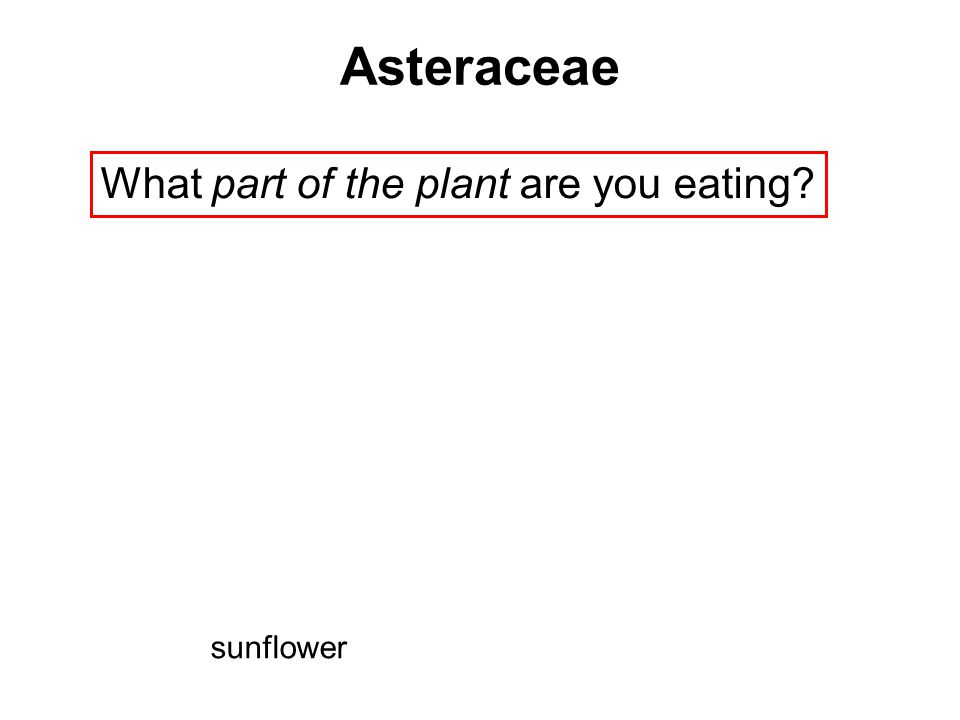What part of the plant are you eating? Asteraceae sunflower