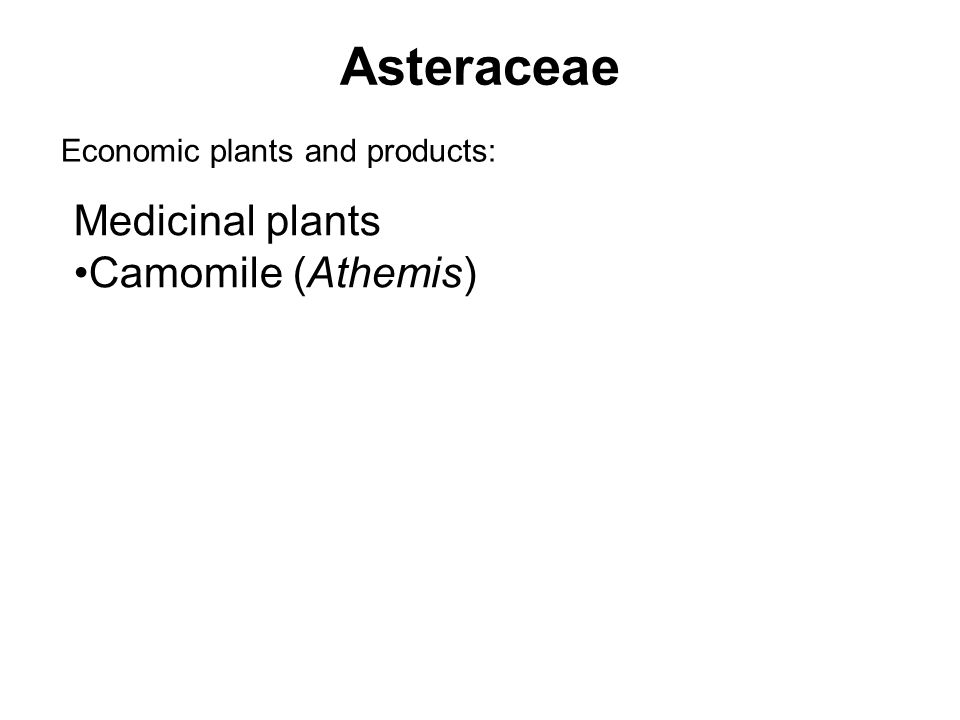 Asteraceae Economic plants and products: Medicinal plants Camomile (Athemis)