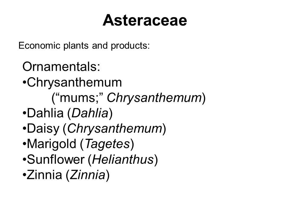 Asteraceae Economic plants and products: Ornamentals: Chrysanthemum (mums; Chrysanthemum) Dahlia (Dahlia) Daisy (Chrysanthemum) Marigold (Tagetes) Sun