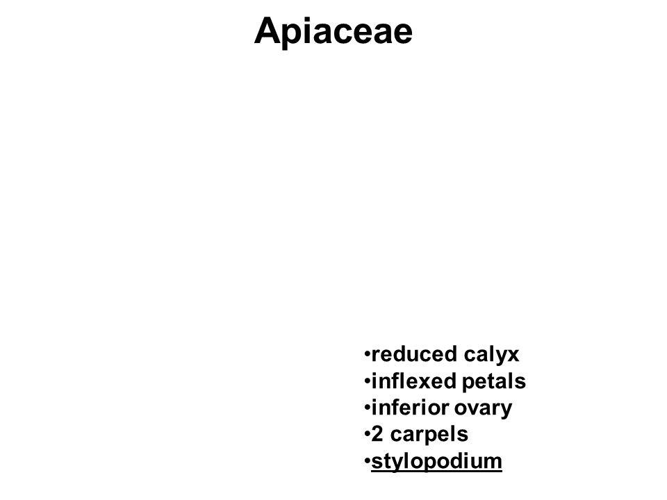 Apiaceae reduced calyx inflexed petals inferior ovary 2 carpels stylopodium